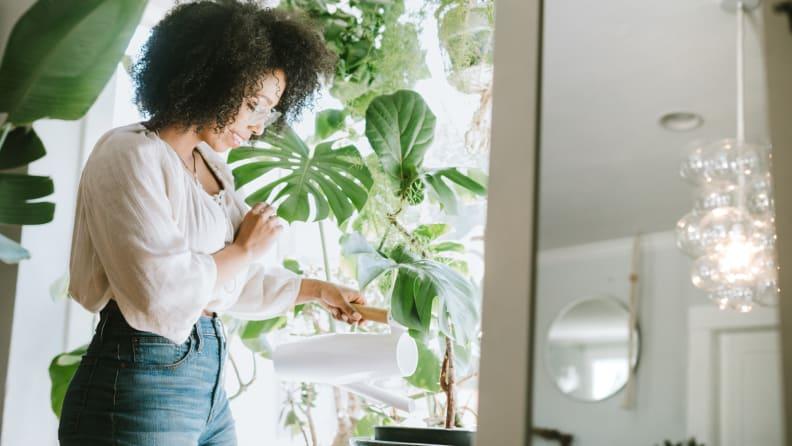 Plants advacar.com