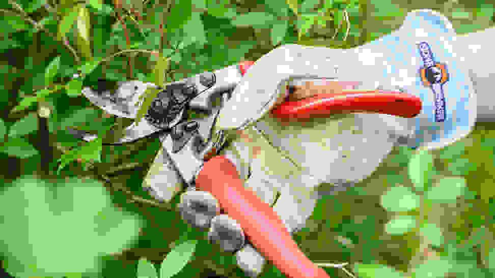 gardening gloves pruning