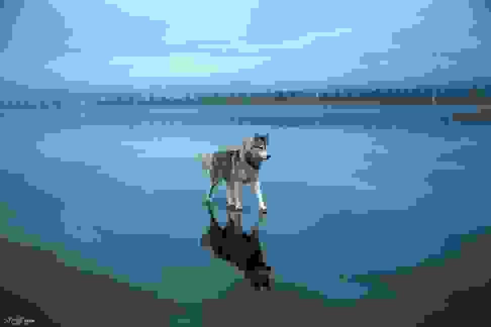 Huskies-Walking-On-Water-3.jpg