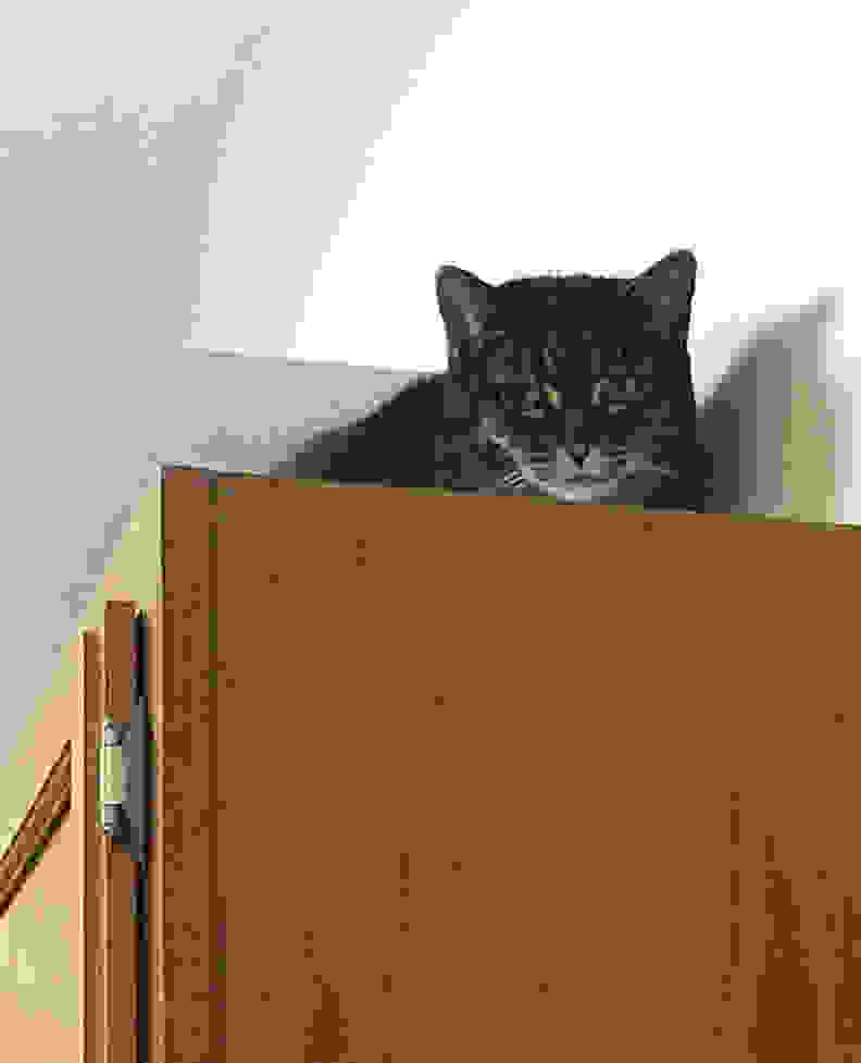 A cat on cabinets
