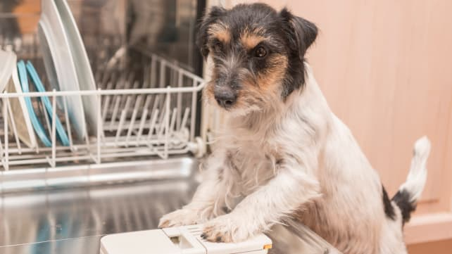 Dog-in-dishwasher-GettyImages-873189280
