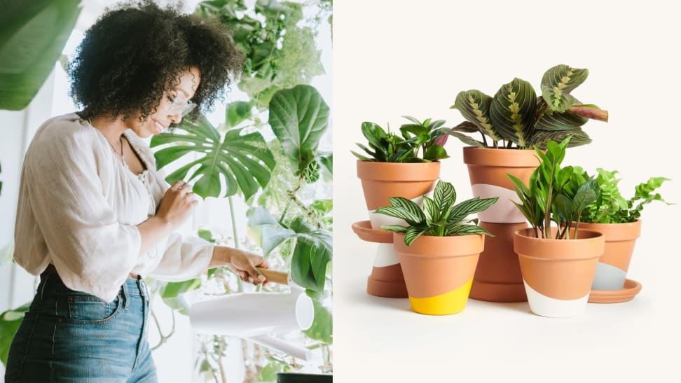 Horti plant subscription review