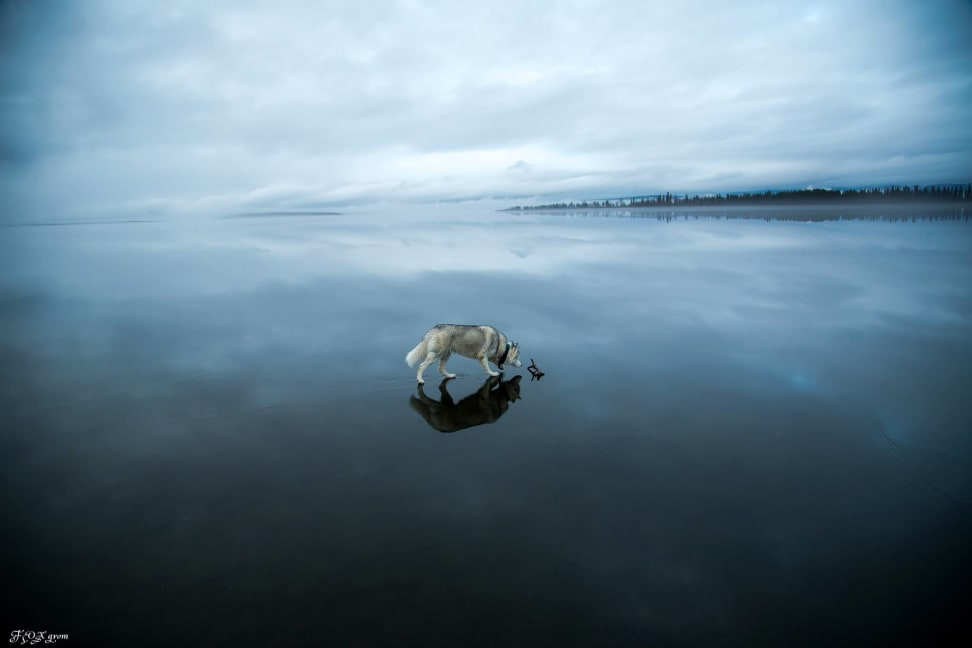 Huskies-Walking-On-Water-7.jpg