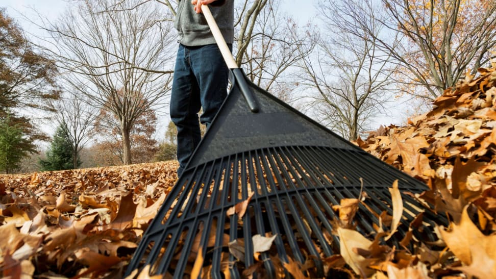 How to rake your leaves the right way