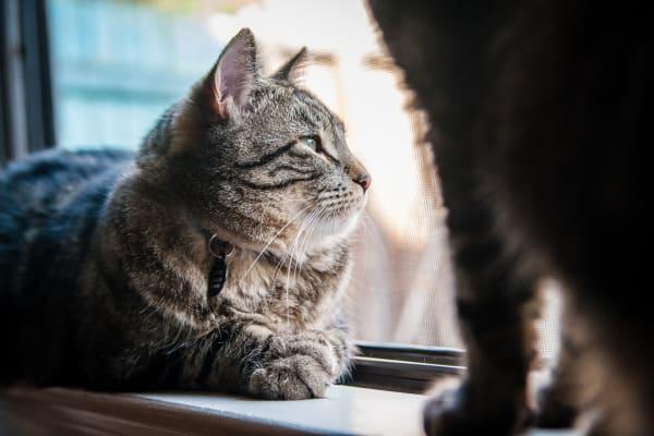 cat lounging on window sill