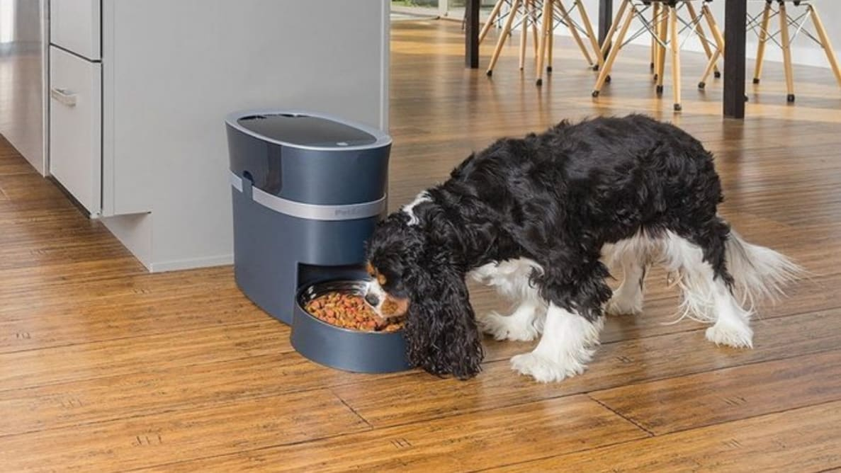 These are the best automatic pet feeders available today.