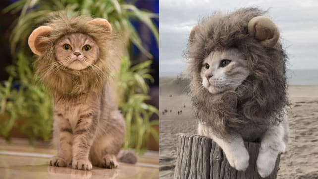 MewToGo Lion Mane for Cats