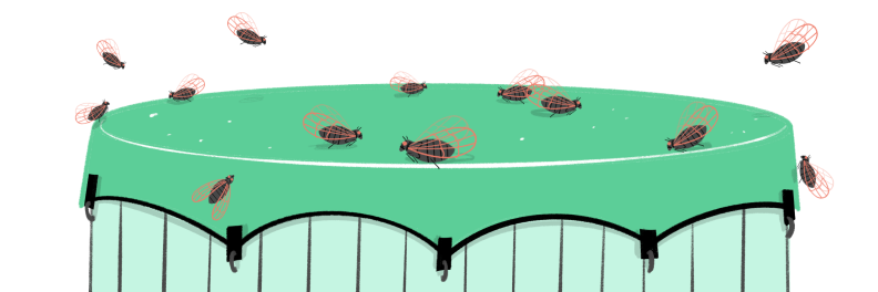 Illustration of hot tub covered up with cicadas flying around it