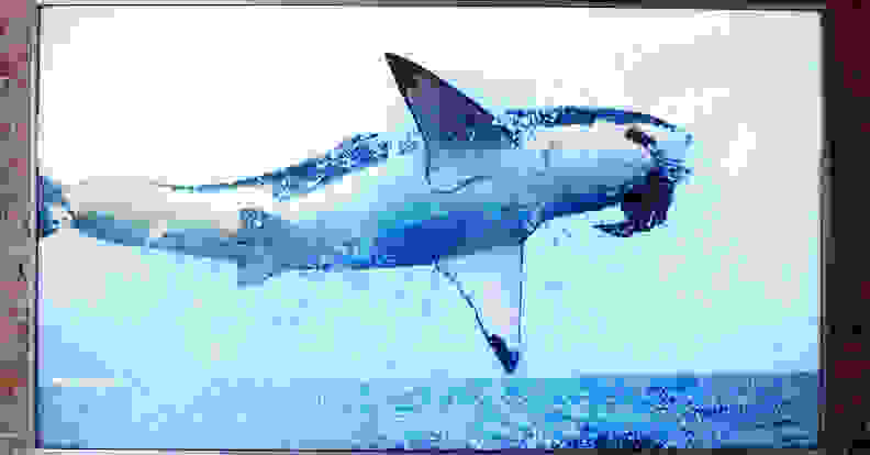 picture-quality-shark