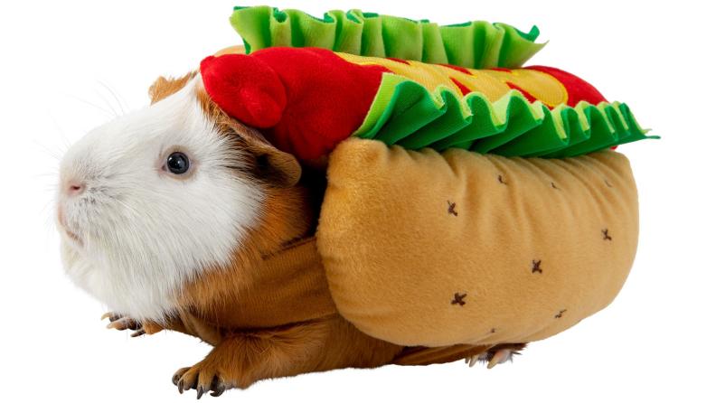 Guinea pig hot dog