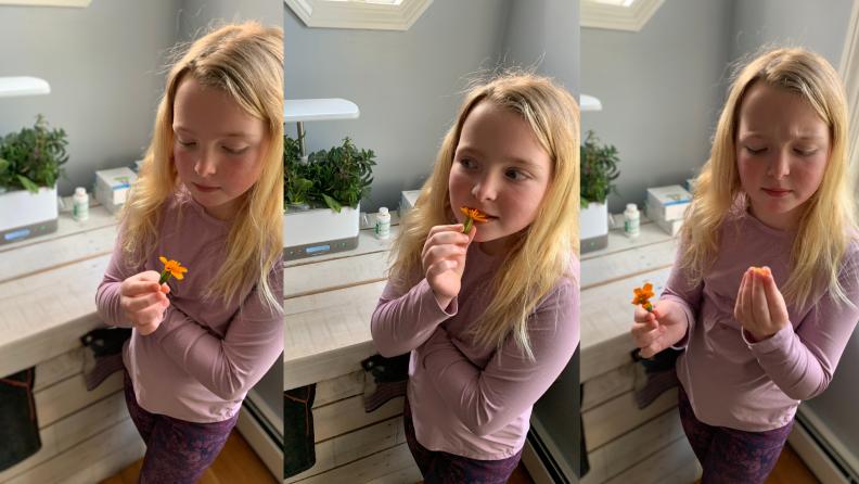 violet tasting
