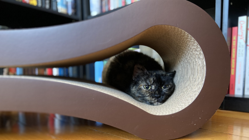 An image of a cat hiding in the Cat Scratcher Lounger.