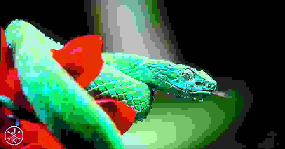 Youtube-4k-snake