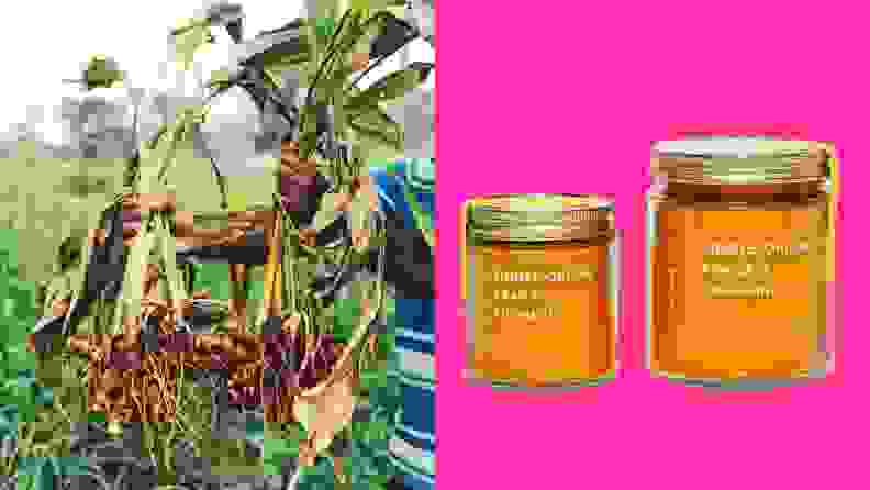 On the left, a person is harvesting turmeric from the fields; on the right, two jars of Diaspora Co.'s top-selling products are on display.