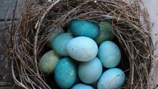 Robin Egg Easter Eggs