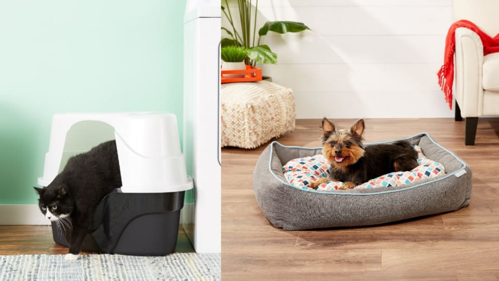 Make your foster pet feel at home with these affordable supplies.