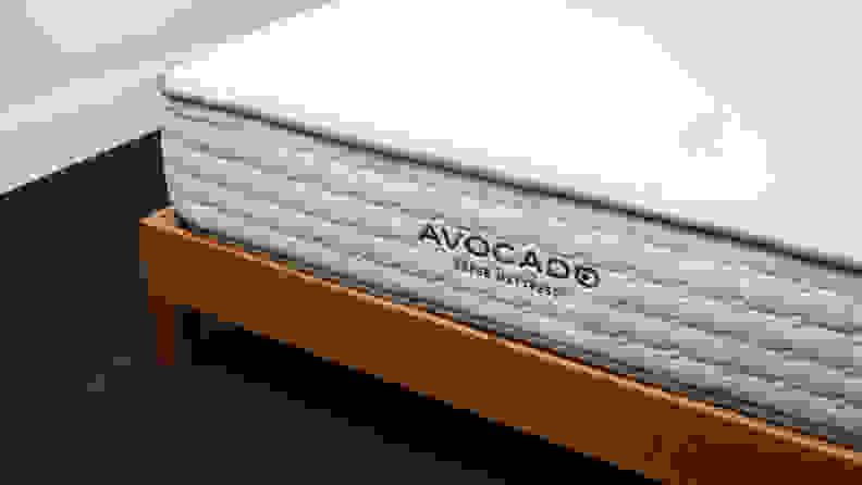 avocado logo bottom buying