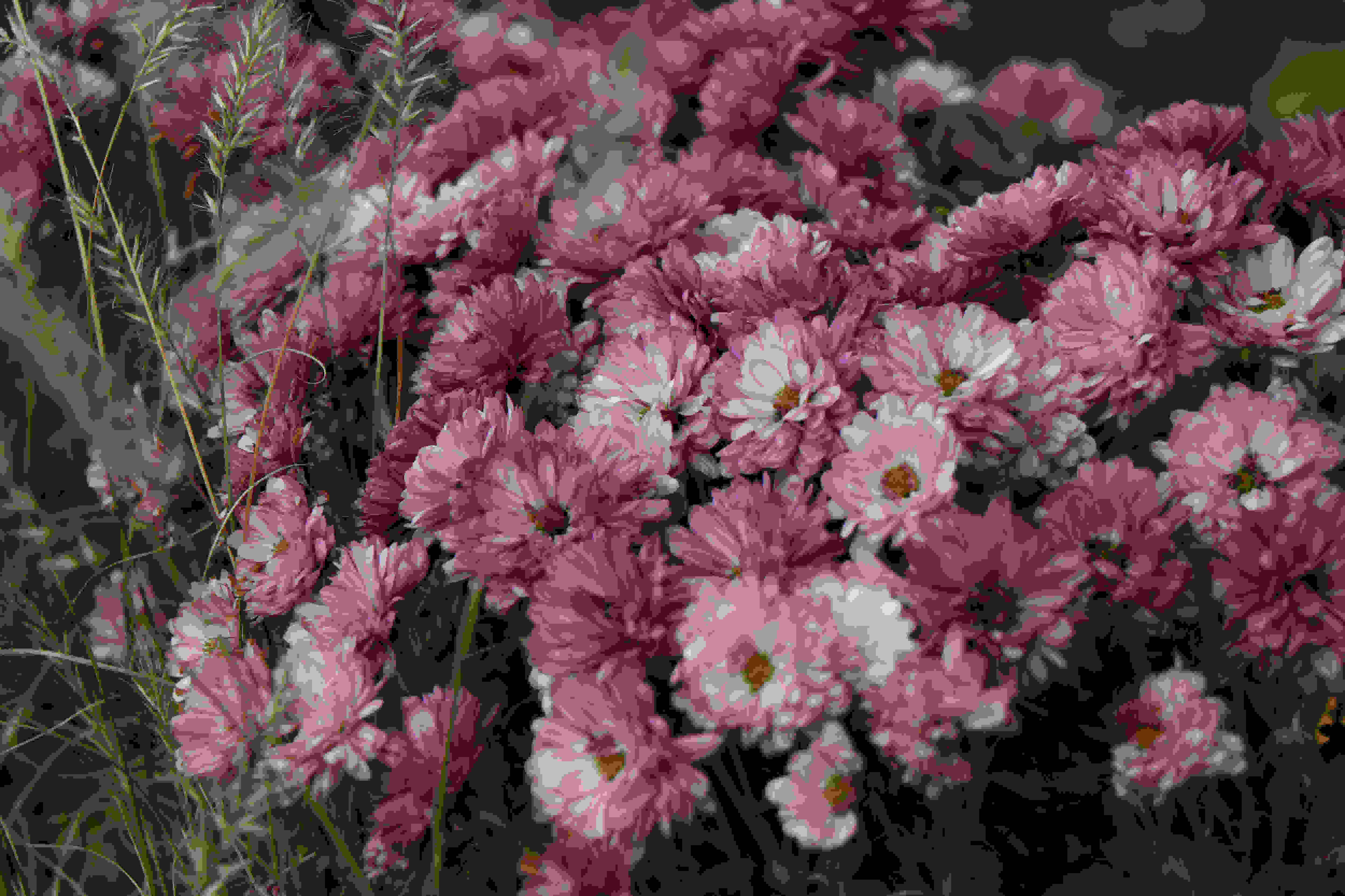 A sample photo of flowers taken by the Canon EOS 7D Mark II.
