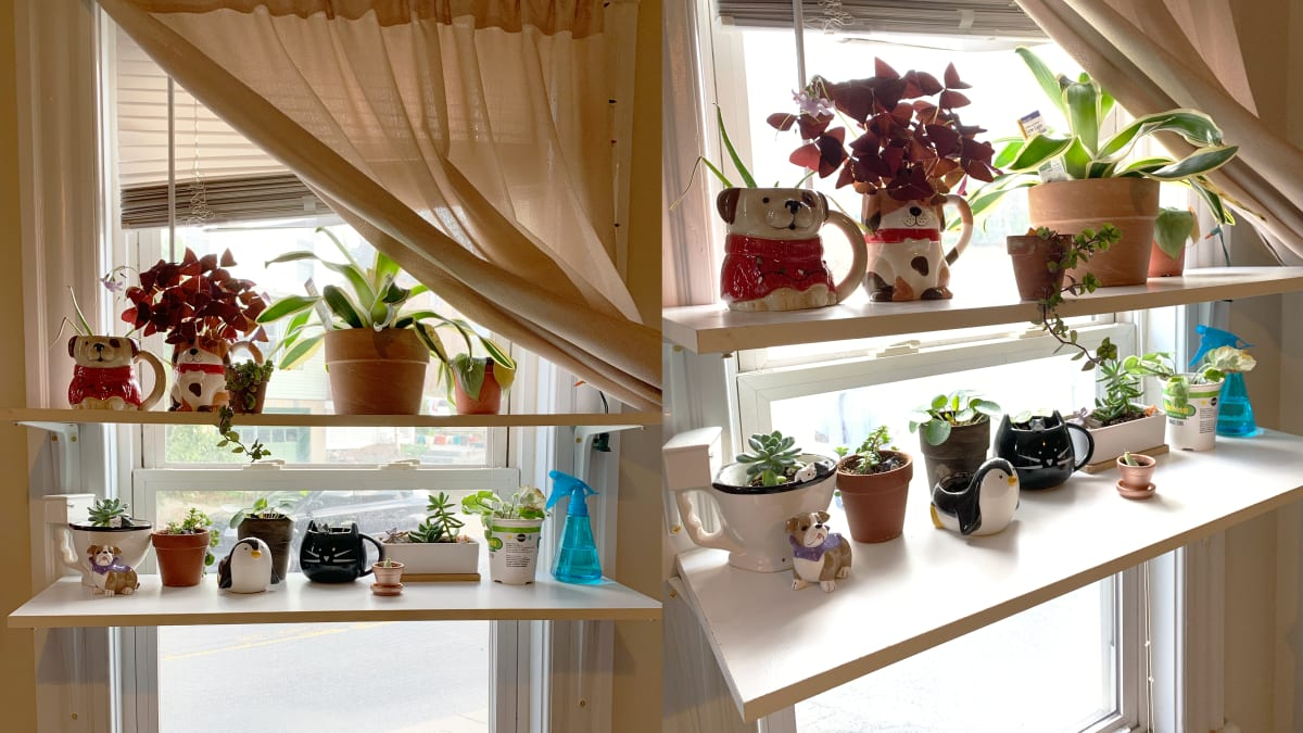 How to build window shelves for all the plants you've acquired over quarantine