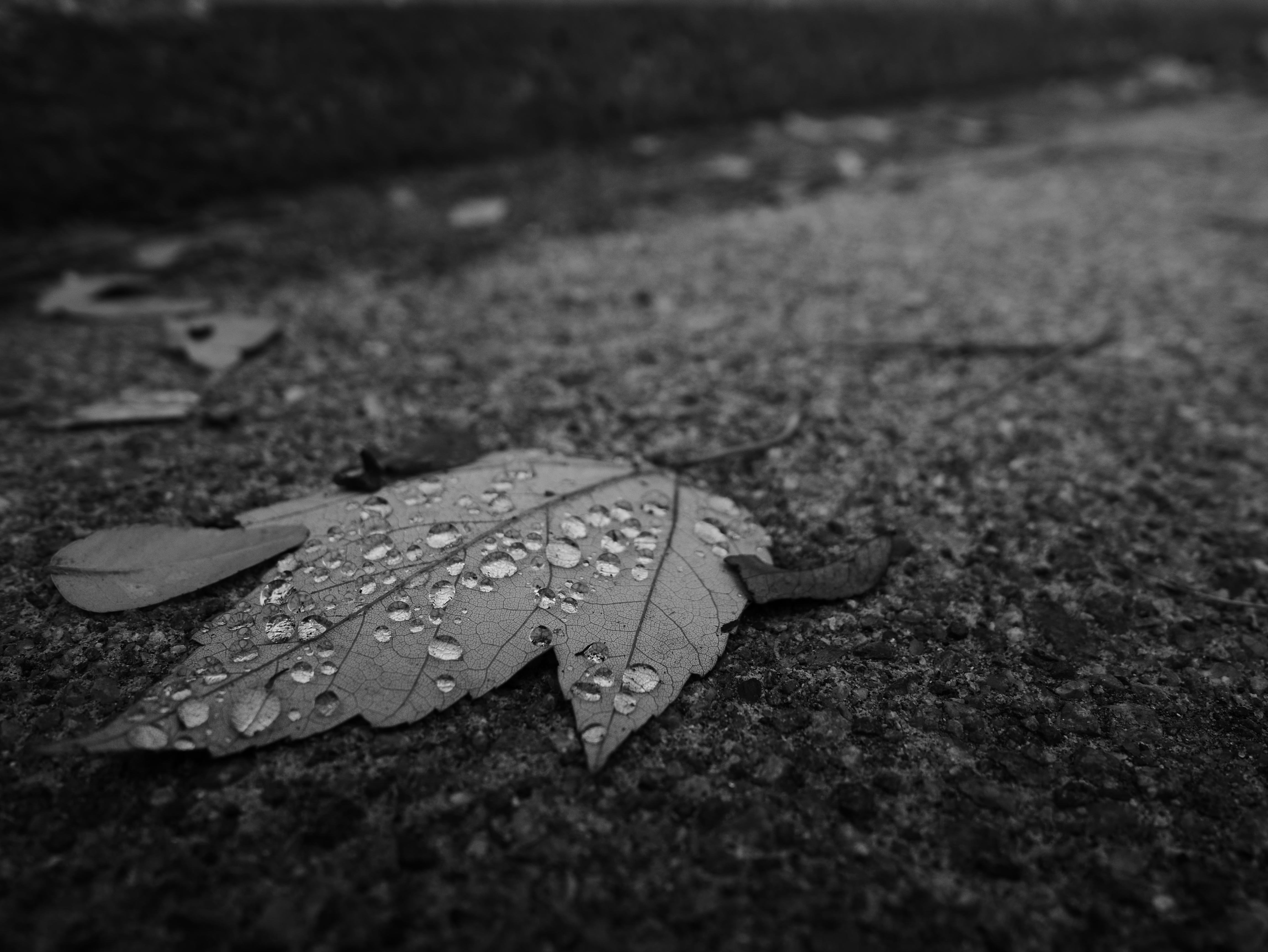 A photo of a dead leaf shot by the Panasonic Lumix GM5