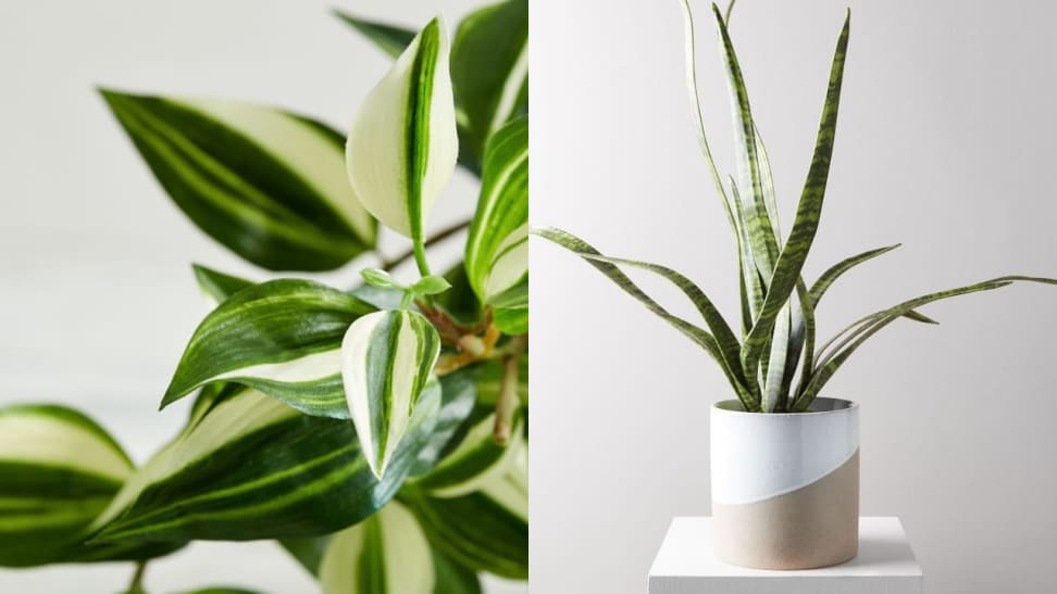 Get all the beauty of natural greenery—without ever having to water.