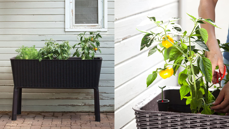 On left, Keter Easy Grow Raised Garden Bed resting in front of house. On right, hand using garden tool to tend to yellow pepper plant in Keter Easy Grow Raised Garden Bed.