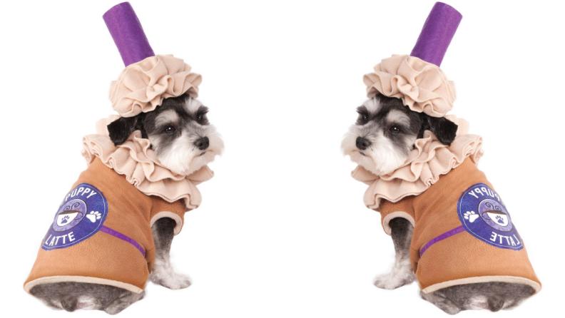 Dog dressed like latte