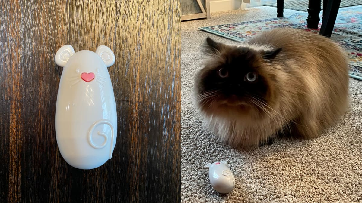 This $4 toy keeps my cats entertained for hours