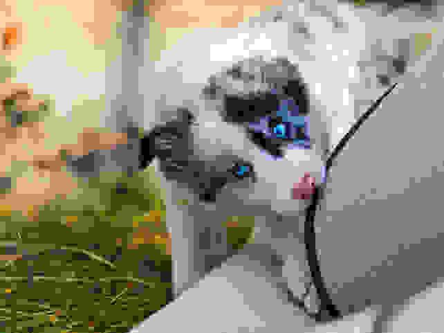 carpet-puppy.jpg