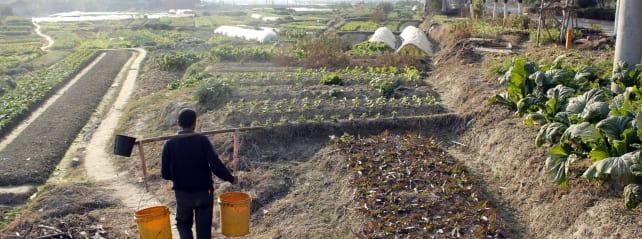 chinese-farm-hero.jpg