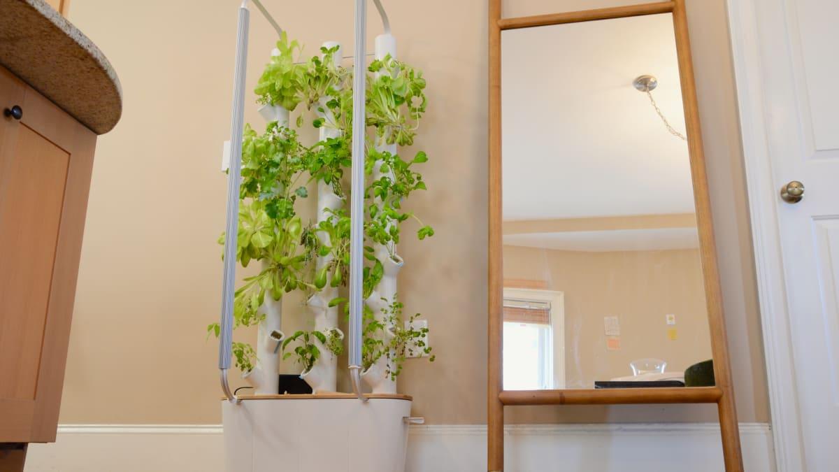 I'm no gardener, but this device helped me grow veggies indoors