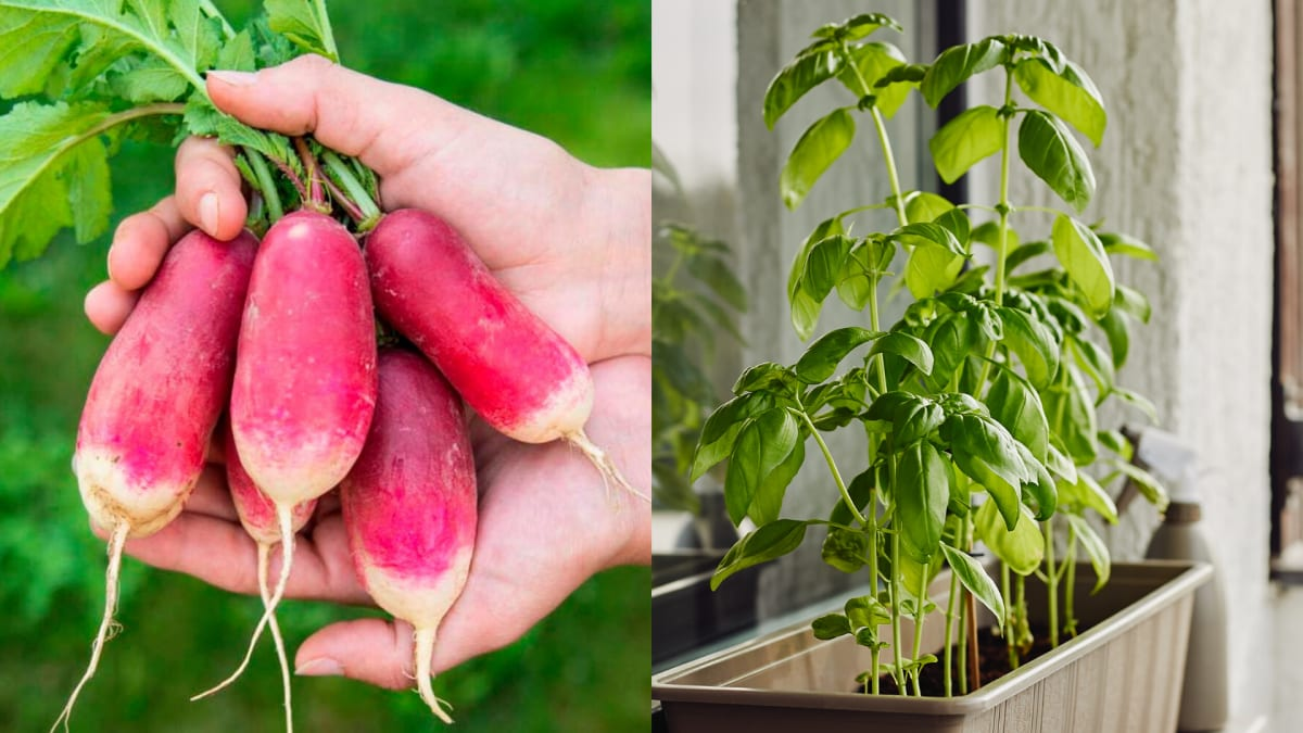 It's not too late to start a garden—here's how to see results fast