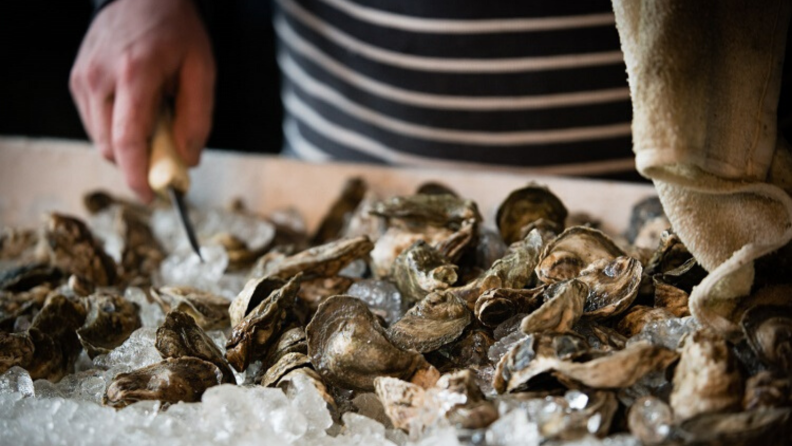 How to care for your oysters