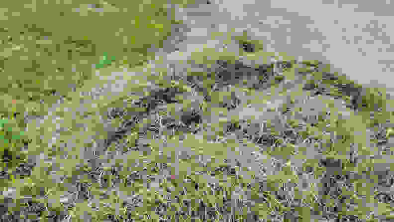 A pile of dead grass clippings