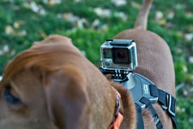 gopro-hero-4-silver-review-design-dog.jpg