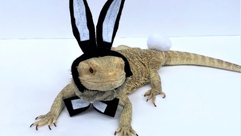 Reptile bunny