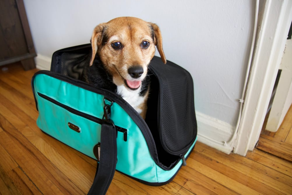 The Best Pet Carriers