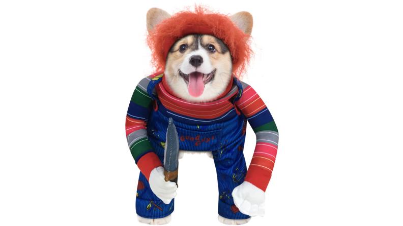 Pup dressed like Chucky
