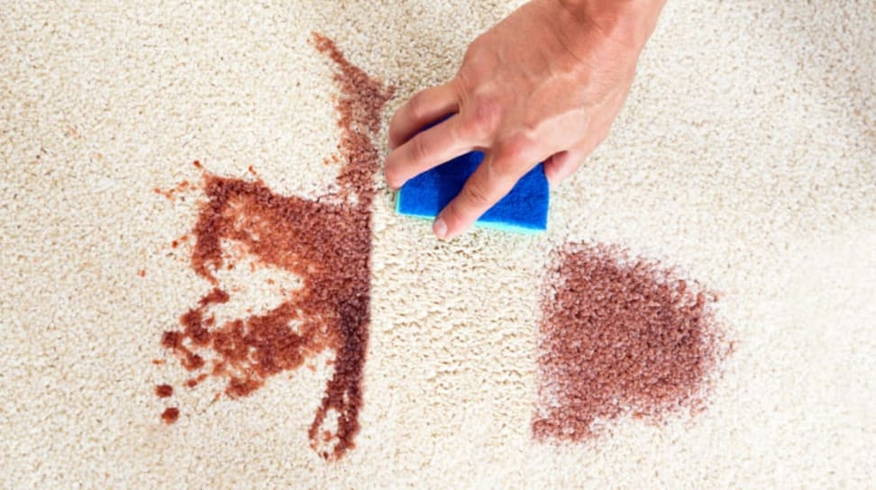 Cleaning up a stain on the carpet.