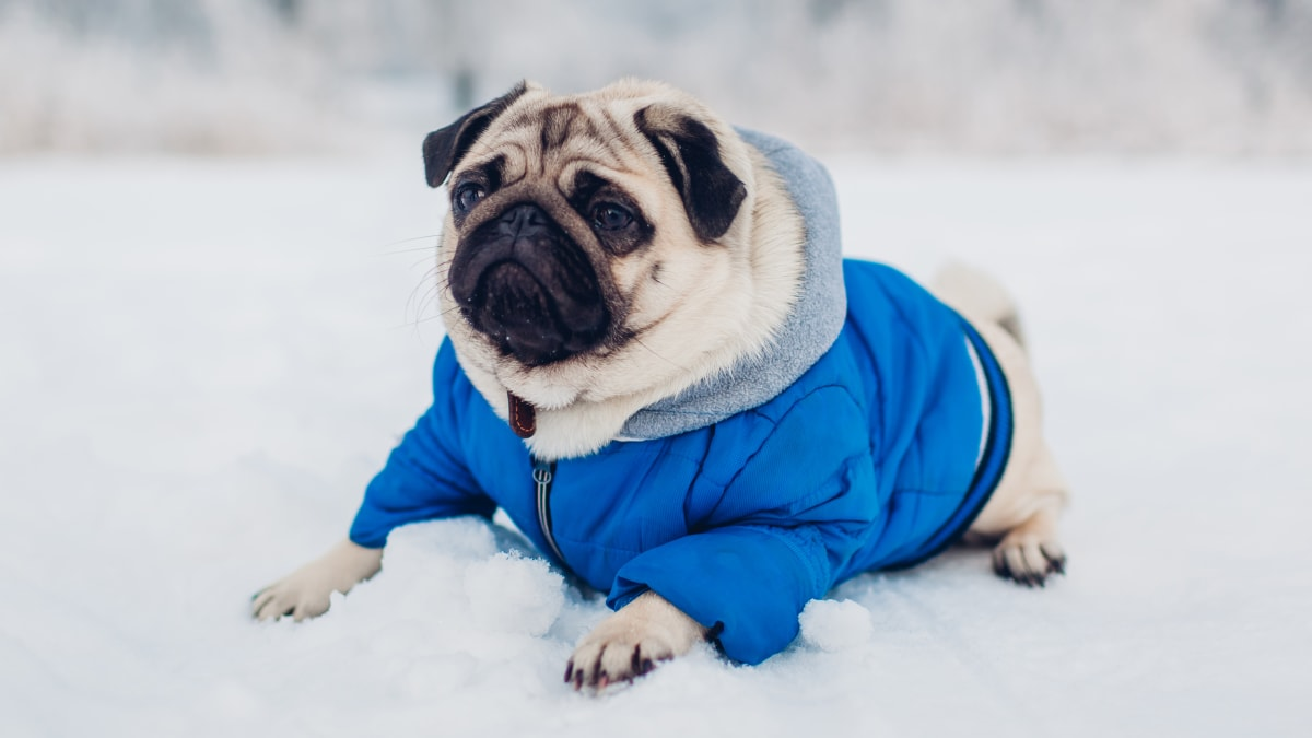 How to keep pets safe during the subzero temperatures expected this winter