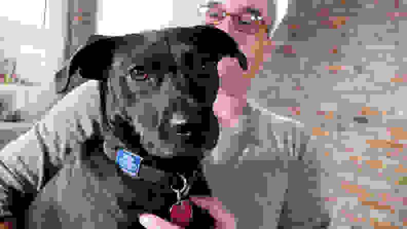 A dog named Cooper
