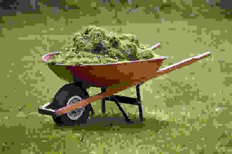 Grass clippings in wheelbarrow