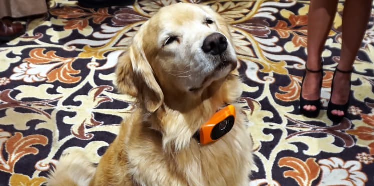 scout 5000 is a cutting edge wearable for your dog reviewed com