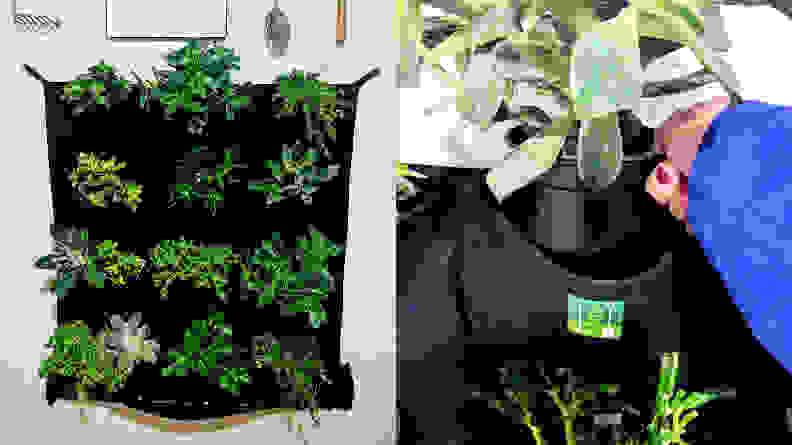 Delectable Garden Vertical Wall Planter