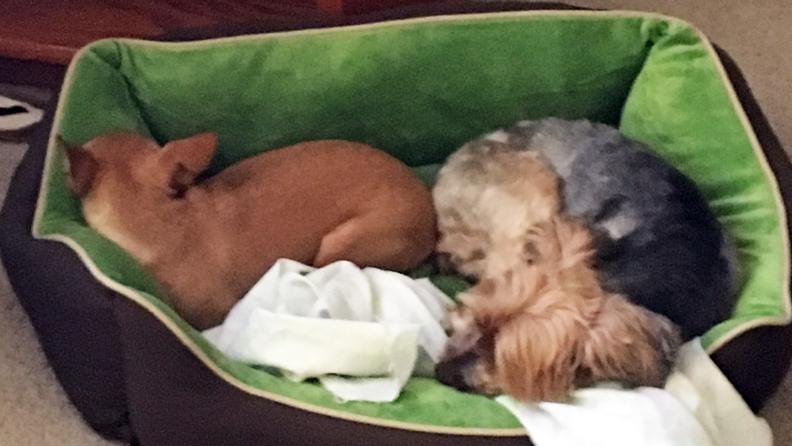 Heated dog bed review