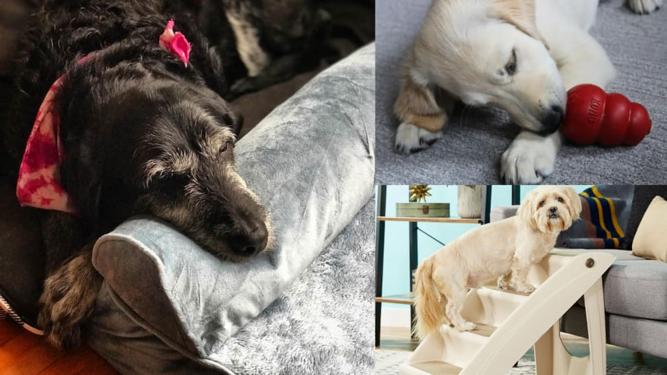 A dog rests her head on a bed, a dog licks a Kong, and a dog climbs stairs