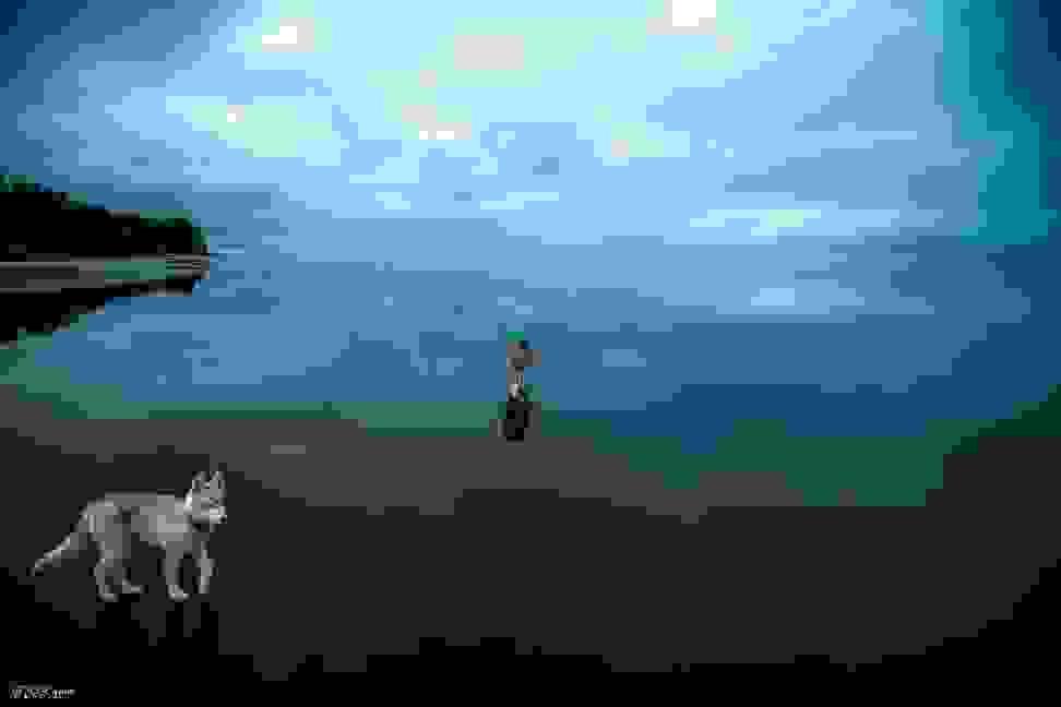 Huskies-Walking-On-Water-9.jpg