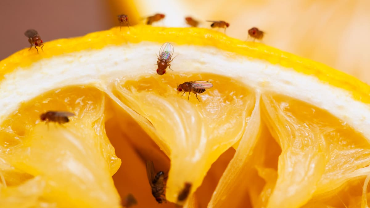 8 products that actually get rid of fruit flies, according to reviewers