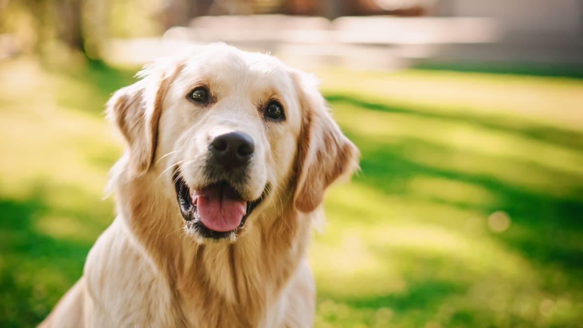 Dog in a yard.