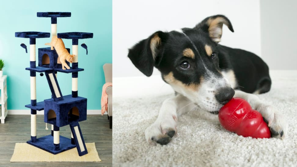 Chewy shoppers can't get enough of these amazing pet products.